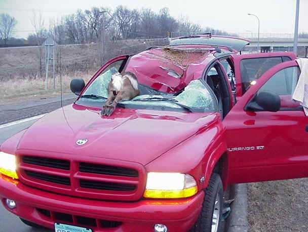 Illinois Crash Fatalities and Injuries Involving Deer